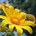 Có những mùa hoa dã quỳ vàng rực (cập nhật)