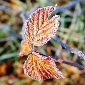 france toulouse bords garonne hiver nature gelée