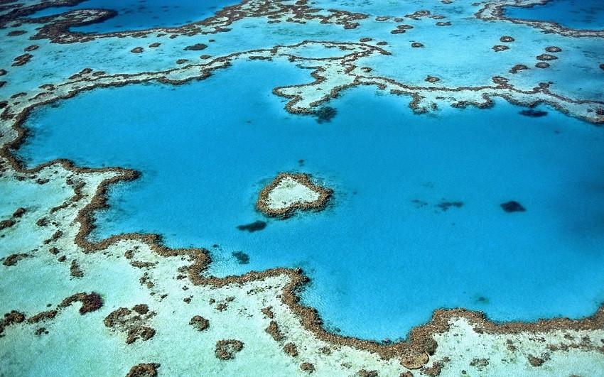 ما هي الشعاب المرجانية؟