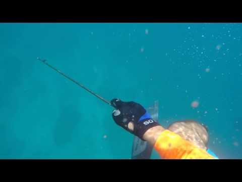 Un buzo capta el momento en que lo muerde un tiburón