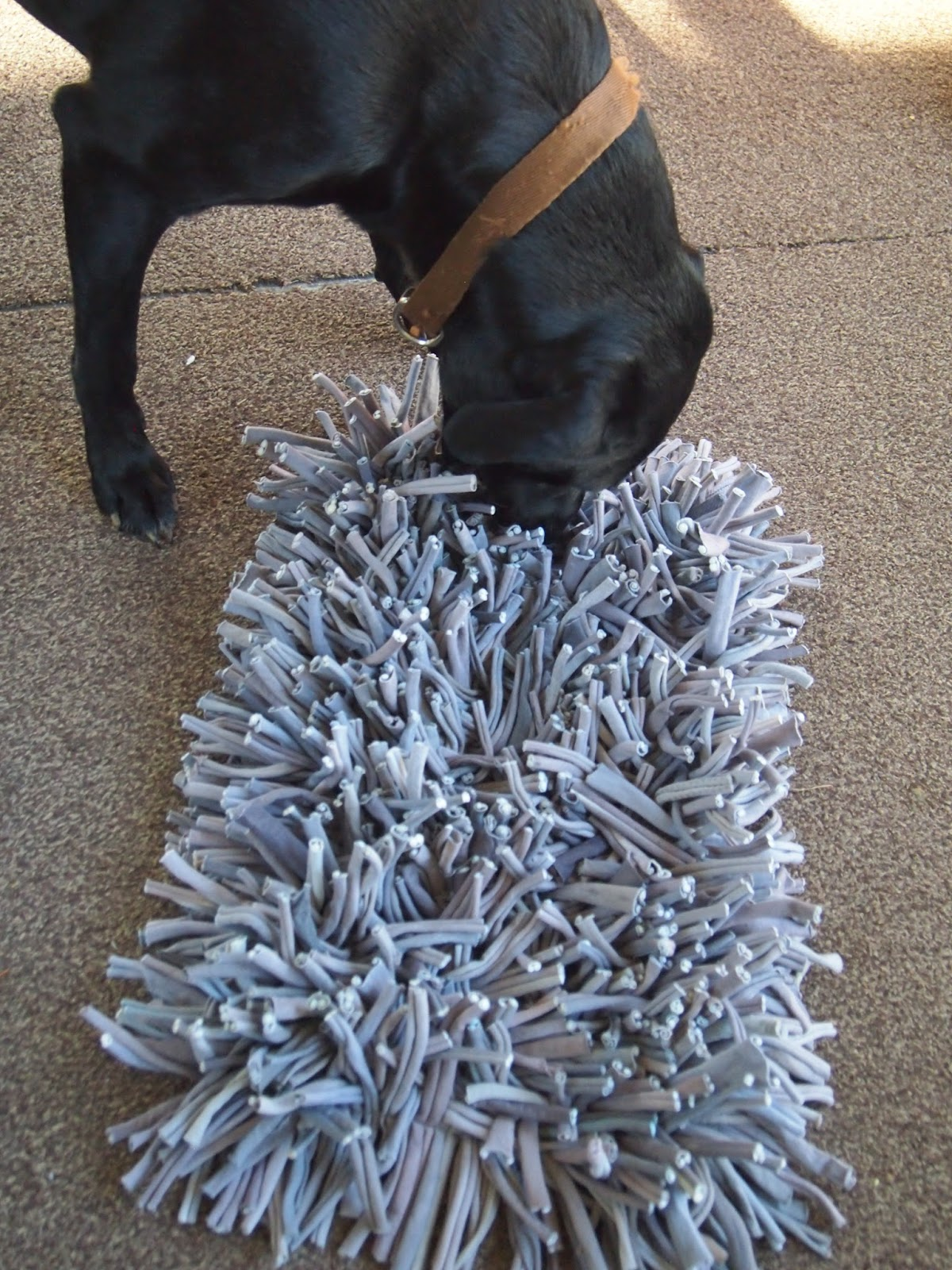 Heck Of A Bunch Wooly Snuffle Mat Pet Product Review