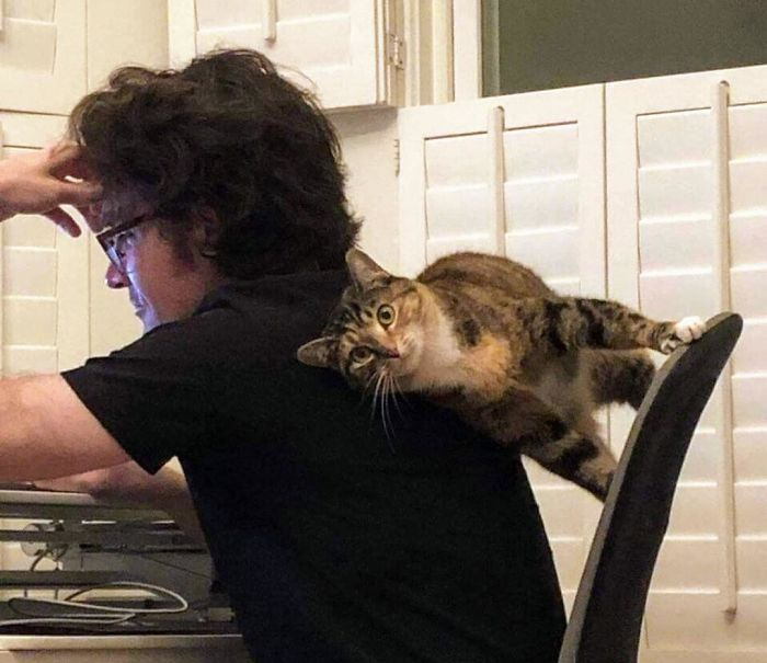 40-cats-defied-laws-of-physics
