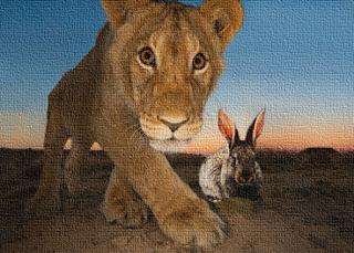 Il vecchio cane, il giovane leone ed il coniglio - La Fontaine