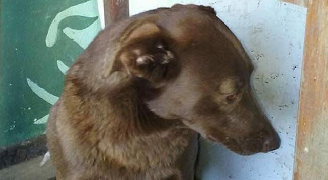 Спустя два года в приюте собака узнала своего хозяина по запаху. Удивительно преданные существа!