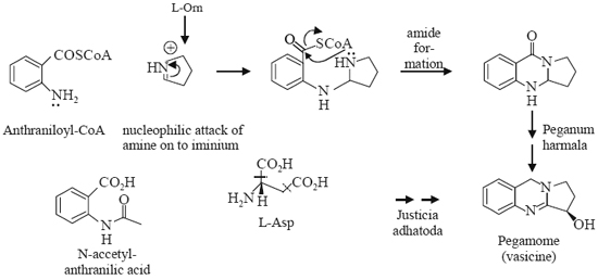 Biosynthesis of Vasicine