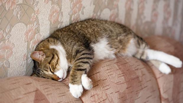 ثلث يوم القطط تناله في النوم