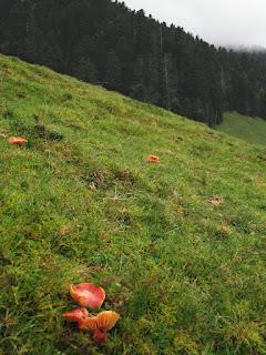 Photo : Prairies maigres à hygrocybes, vallée de Campan (Hautes Pyrénées) © Gilles Corriol/CBNPMP
