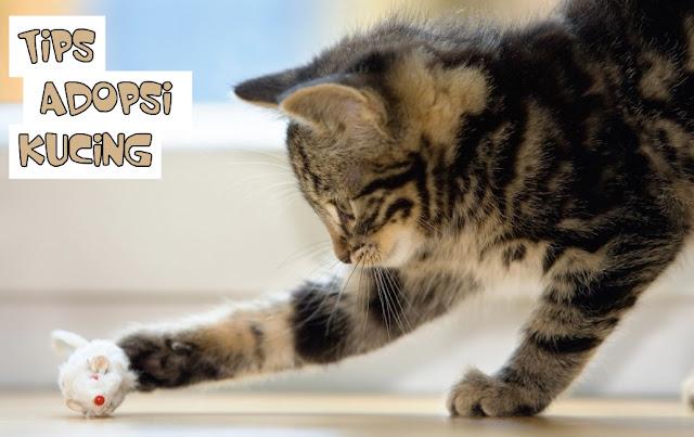 Cara Merawat Kucing Adopsi