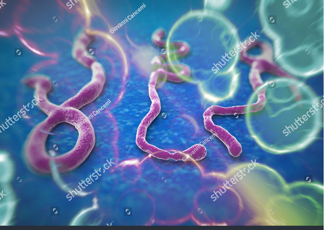Ebola virus in hindi
