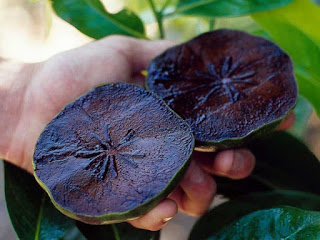 black sapote fruit images