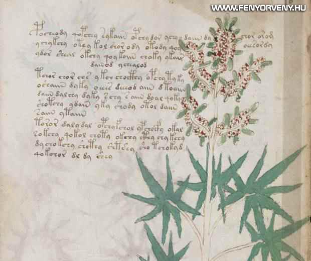 voynich kezirat 04 - A középkor legtitokzatosabb irománya, a Voynich-kézirat