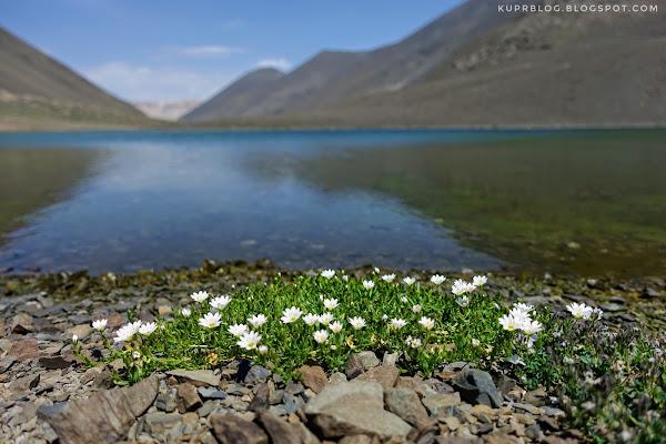 Небольшая, скудная раститедьность на берегах озёр.