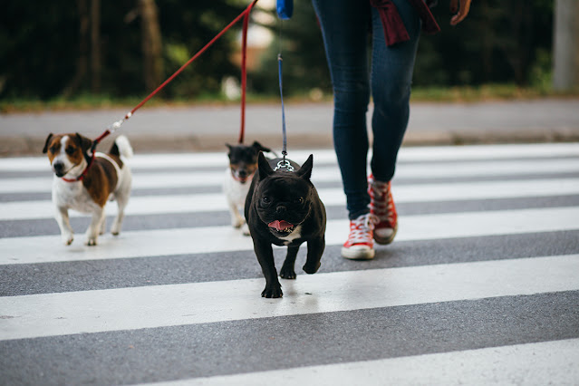 How Far Should You Walk Your Dog? How Long And Far Does My Dog Need To Exercise Each Day?