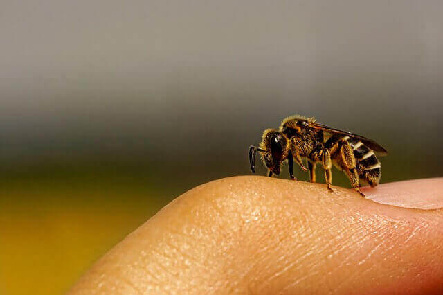 طرق علاج تورم لسعة النحل و الدبابير