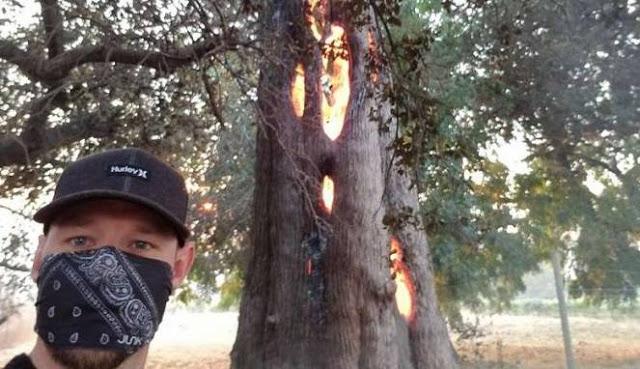 Pria Ini Temukan Pohon Ajaib yang Gegerkan Dunia