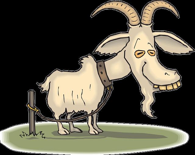 mahasiswa domba akademika