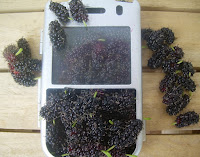 blackberries in a blackberry