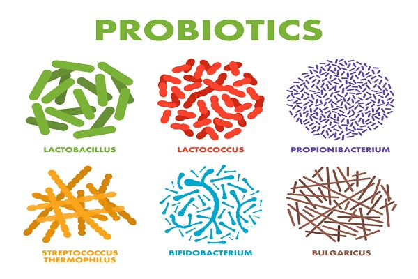 Hi Parents, This is Benefits Of Probiotics And Prebiotics For Children