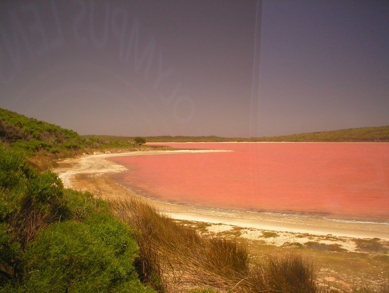 Lake Hillier, The Pink Lake in Australia 3