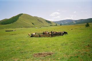 Mongolia, ratsastusmatka, Riitta reissaa,