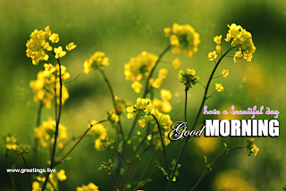 good morning wishes Beautiful yellow flowers greetings