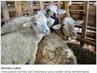 29 Jenis Domba Di Dunia