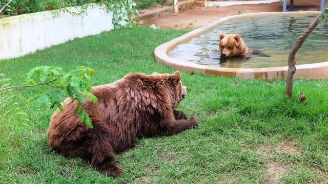 Urso Dimas chega a São Paulo e vai embarcar com companheira para santuário no interior do estado