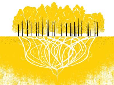 www.fertilmente.com.br - O Infográfico mostra como todas as unidades são conectadas a um mesmo  sistema de raízes muito profundo, e muito antigo.