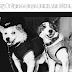 अंतरिक्ष की सैर करने वाला वह कुत्ते – Story Of Space Dogs Belka And Strelka