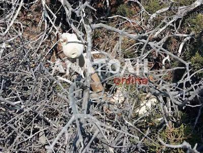 Τουρίστας βρήκε σακούλα με ανθρώπινα οστά στη Χρυσή