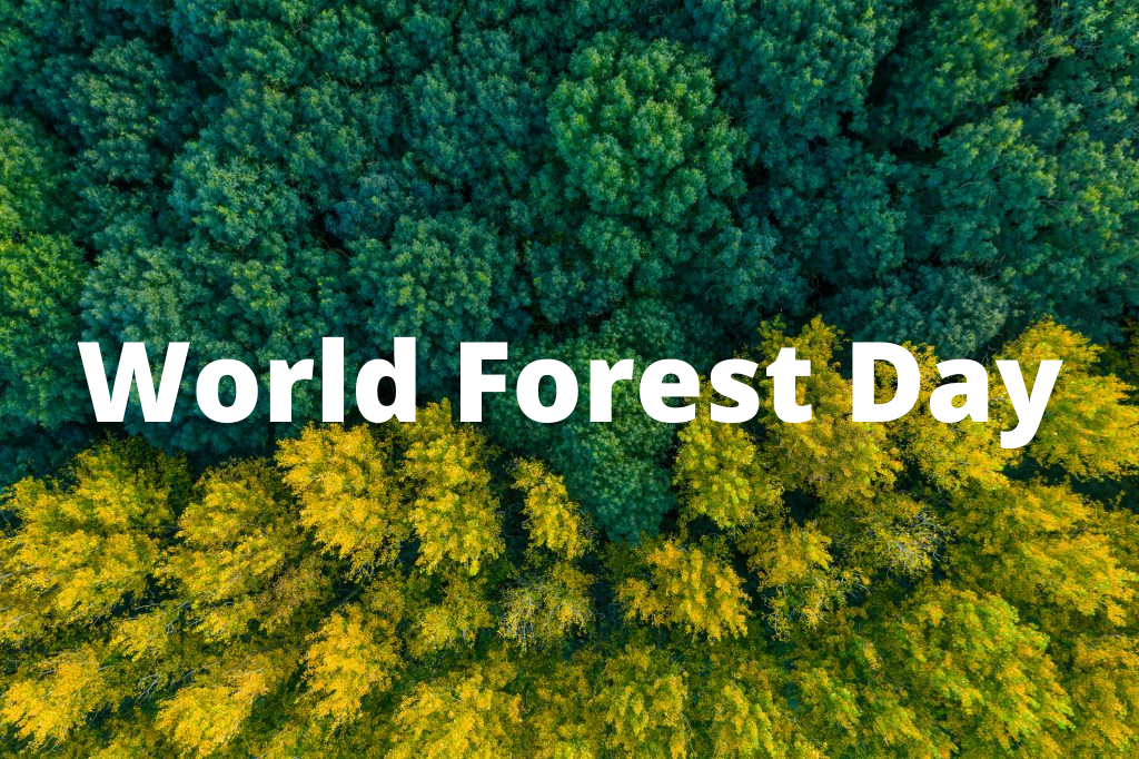 world environment day is celebrated every year on june 5 to remind people about the importance of nature.the world environment day theme 2021 is 'ecosystem restoration'. 21 March World International Forest Day