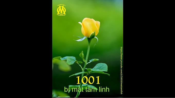 1001 Bí Mật Tâm Linh (0104) Thân thể bạn vẫn còn là hạt mầm, nó chưa bao giờ trở thành hoa sen