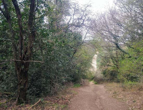The path downhill through woodland to Rousebarn Lane