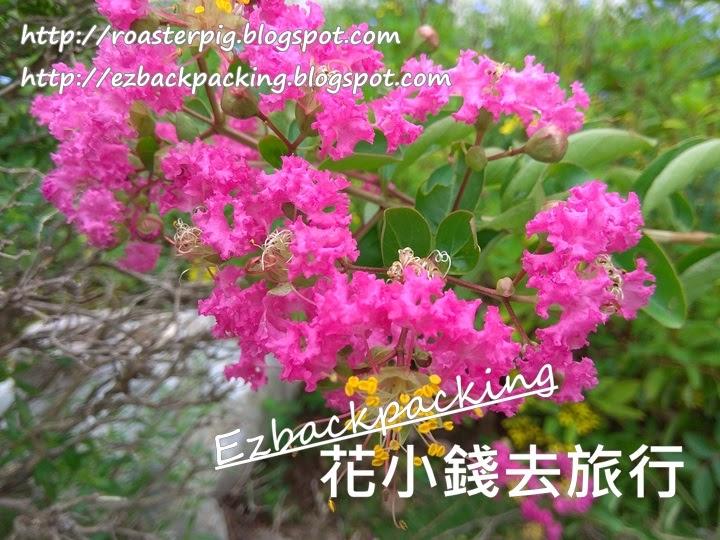 屯門紫薇花