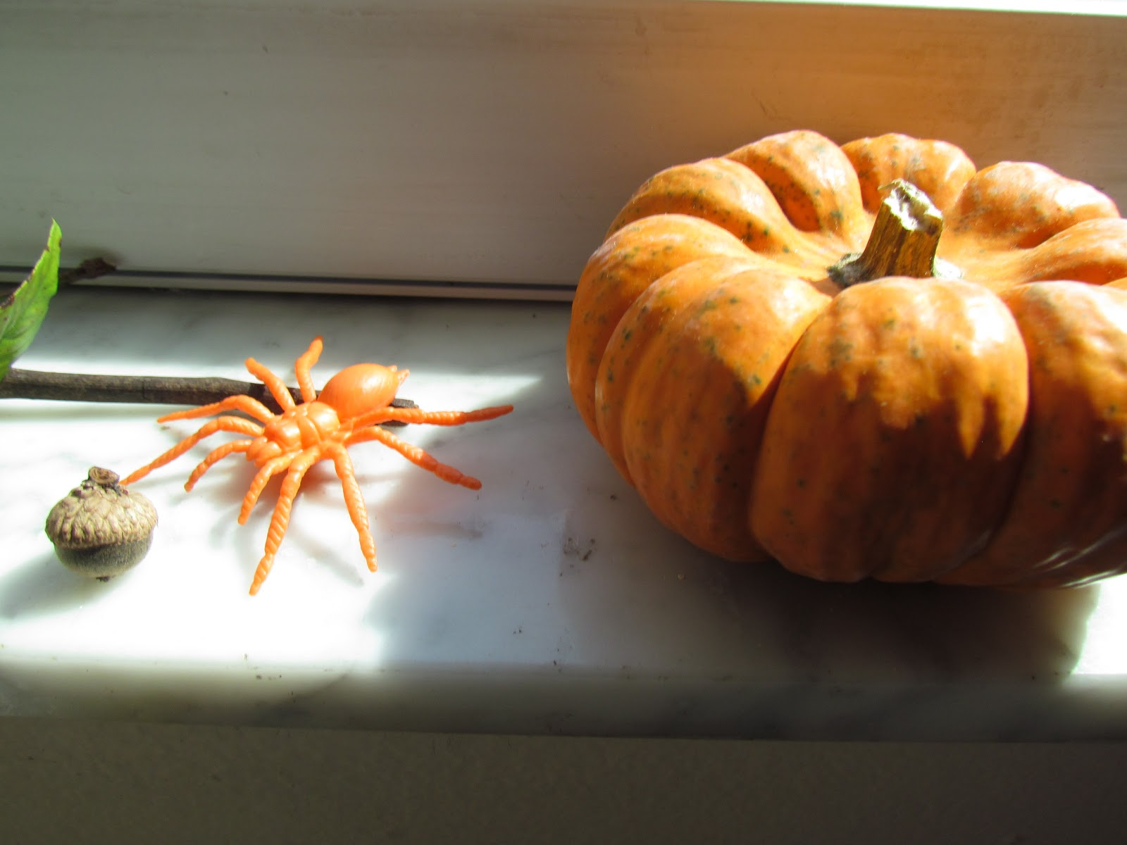A flat lay windowsill pumpkin, plastic orange spider toy, and an acorns from an oak tree, nature art flat lay display, wildlife photography, Halloween Flat Lay