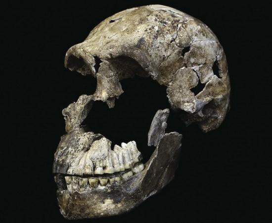 Laporan Penelitian Homo naledi Hidup dengan Homo sapiens Sampai Pleistosen Tengah
