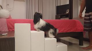 escadas para cães em cama box