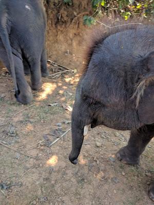 Runzelfuesschen Elternblog Elephant Rescue Park Chiang Mai mit Kind Erfahrung