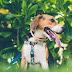 Πρόστιμο 500 ευρώ για σκύλο-φύλακα επειδή γαβγίζει