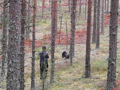 Nyt jo selkeästi hahmotettava mies joka tähtää kamerallaan melko läheltä metsoa.