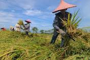Berkunjung Ke Kab. Takalar, Staf Khusus Mentan Ajak Petani dan Penyuluh Tetap Produktif