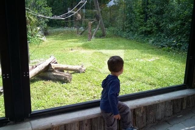 E' importante portare i bambini allo zoo