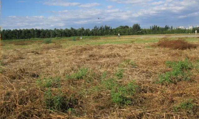 Nghị định 91/2019: Tự ý chuyển sang đất ở phạt tới 1 tỷ đồng