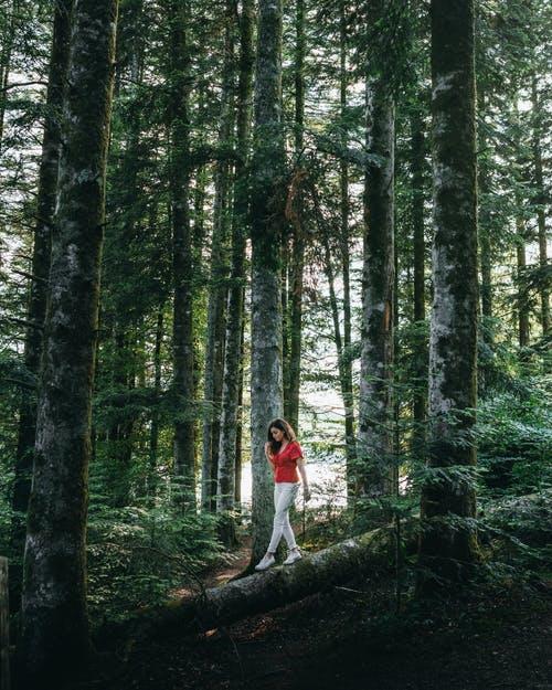 هيكل الشجرة التركيب الأساسي للأشجار