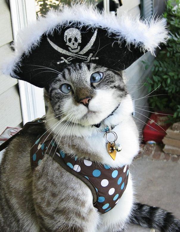 Pirate cross-eyed cat! Arghhh!