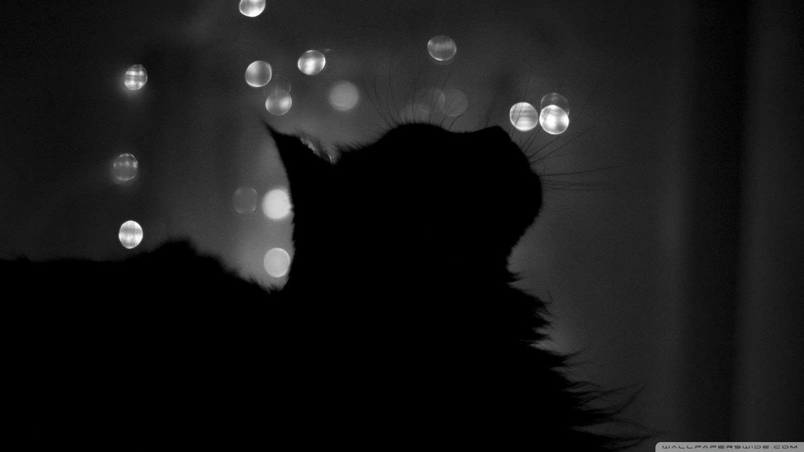 Black Cats HD Wallpapers