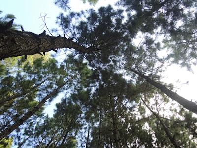 hutan mangli