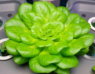 Keunggulan dan Cara Budidaya Sayuran Menggunakan Sistem Hidroponik
