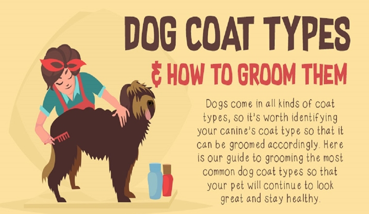 Dog Coat Types & How to Groom Them #infographic