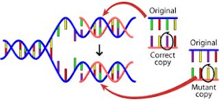 Genetic information is stored in DNA
